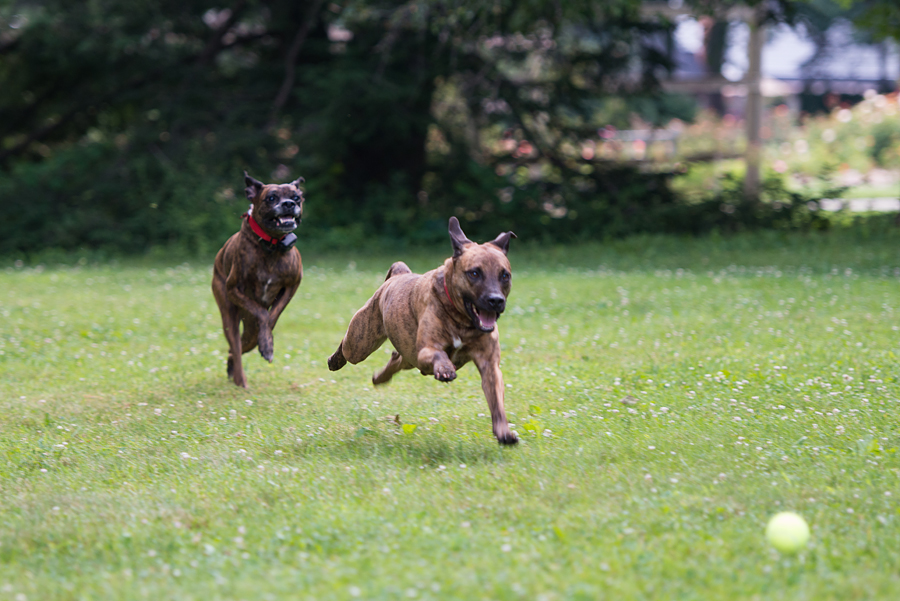 dogs chasing through the - photo #26